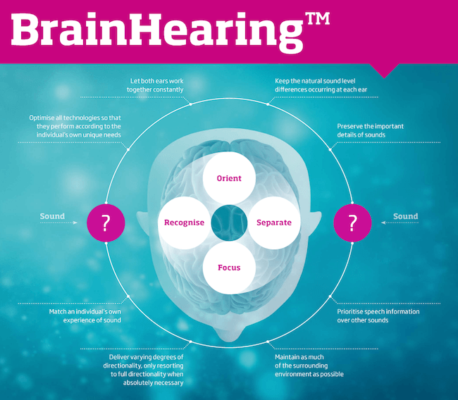 a infographic showing how the brain hears